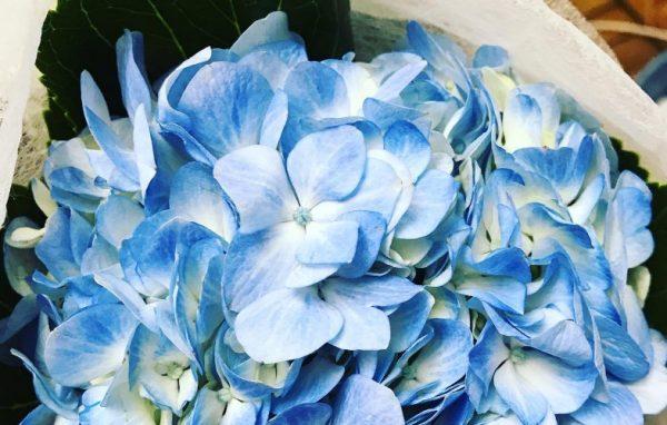 Фото с сайта moonflowers.com.ua
